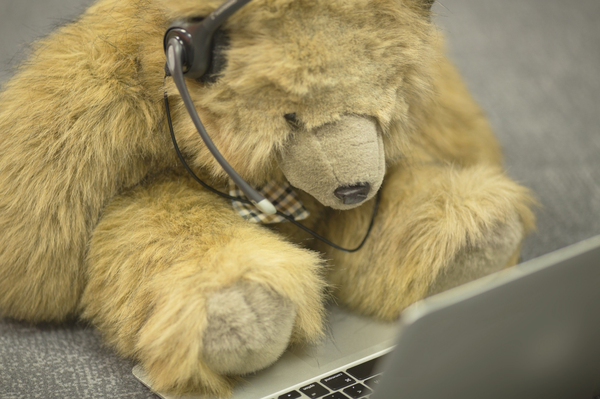 Call Centre Bear